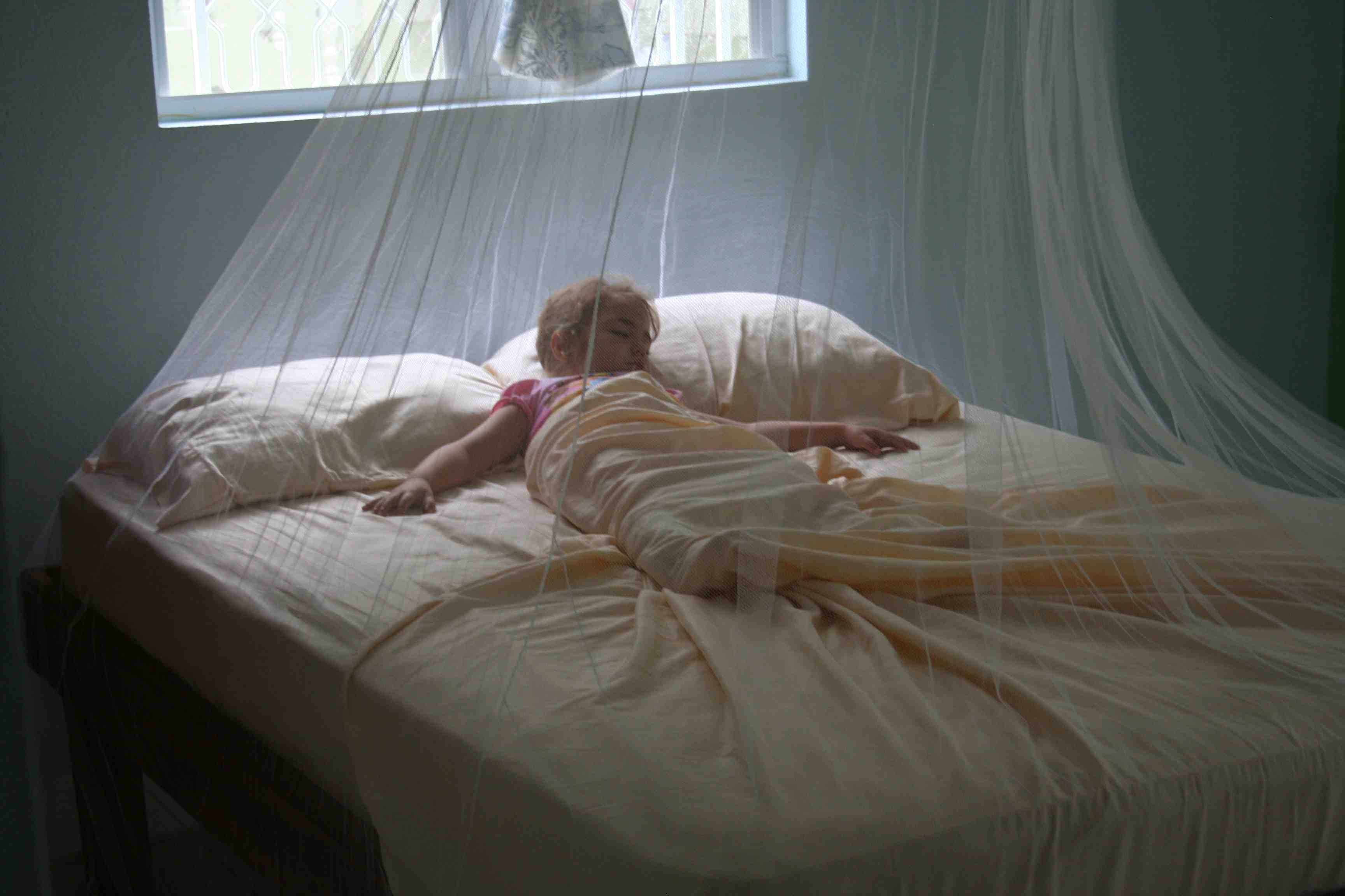 Mosquito Net Images Frompo